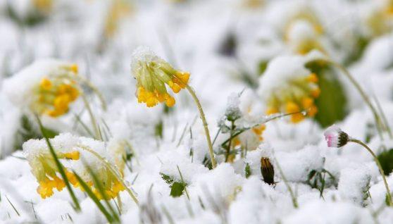 Синоптики розповіли, яким буде перший день весни