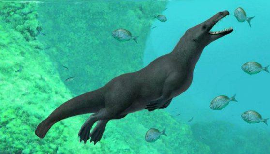 У Єгипті виявили скам'янілість кита з чотирма лапами